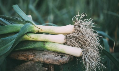 Organic leek on a wooden table in the garden. Organic vegetables. Harvest.